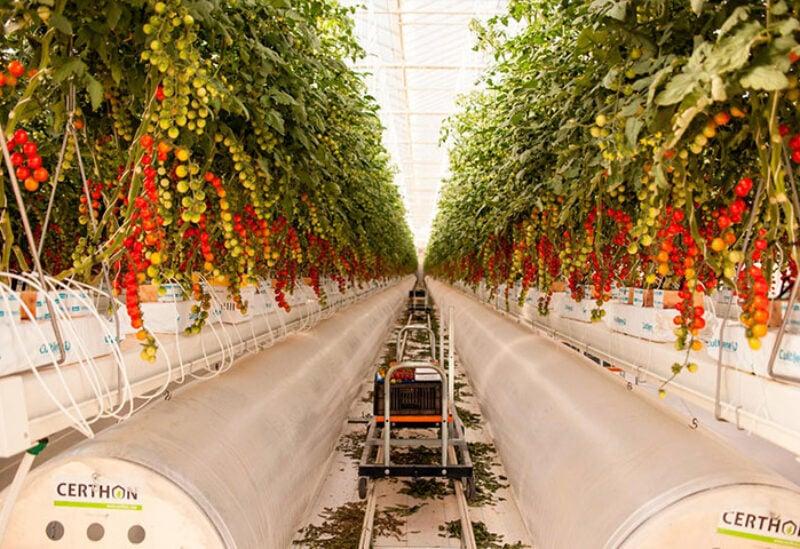 Food security in UAE