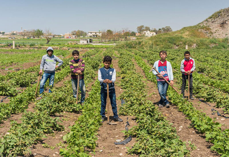 Children working in agriculture in Lebanon