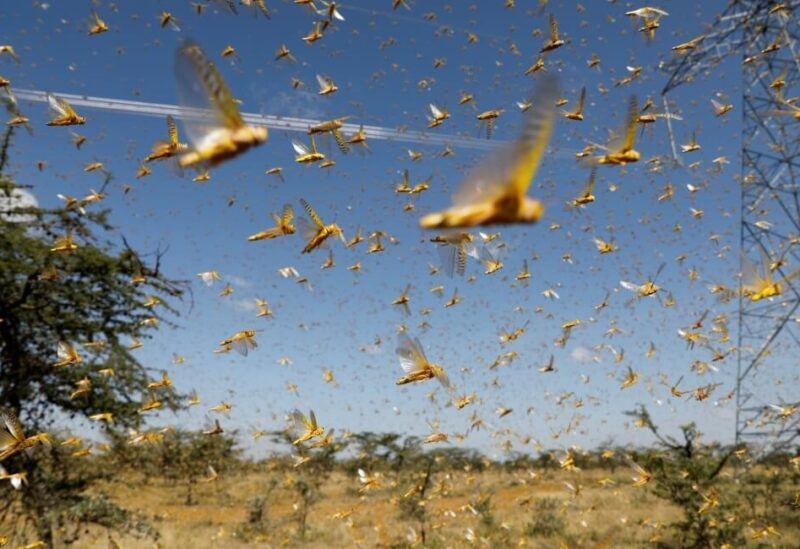 Locusts wave