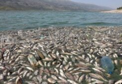 Dead fish are seen floating in Lake Qaraoun on the Litani River, Lebanon April 29, 2021. Picture taken April 29, 2021. REUTERS