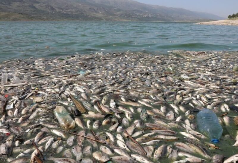 Dead fish are seen floating in Lake Qaraoun on the Litani River, Lebanon April 29, 2021. Picture taken April 29, 2021. REUTERS