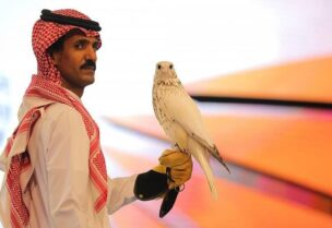 The Gyrfalcon was sold on Sunday on the last day of the International Falcon Breeders Auction (IFBA). (SPA)